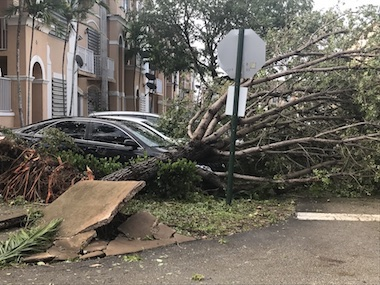 Tree Fell on Car in Miami Lakes Shoma Homes After Hurricane Irma